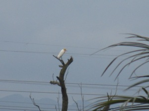 A random white bird landed on a branch near by during this time.  Perhaps as another visual reminder of the Holy Spirit's presence.