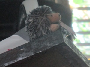 The Porcupine I used as a visual aid.